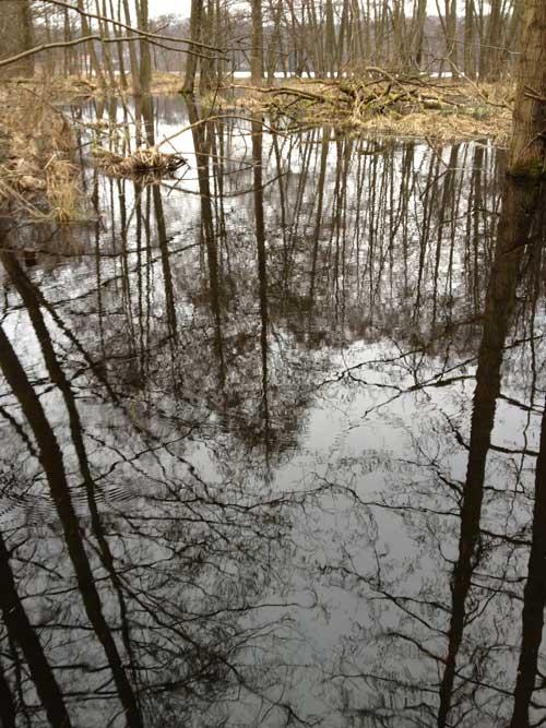 Wo die Biber leben, Sumpfgebiet direkt am Amtssee.